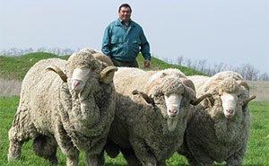 Куда делись жертвенные овцы, подаренные Рамзаном Кадыровым мусульманам Адыгеи?