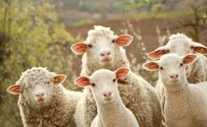 Управление ветеринарии Калмыкии будет работать в усиленном режиме