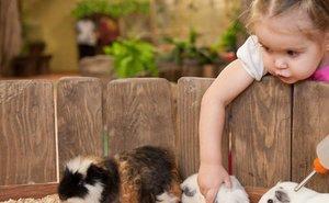 Зоозащитница из Ростова требует закрыть в России все контактные зоопарки