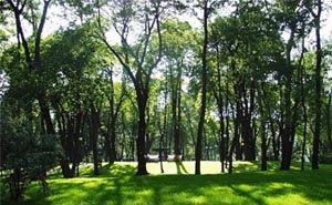 Волгоградцы могут оказаться в центре леса