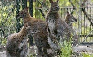 В Ростовском зоопарке обеспокоены смертностью животных