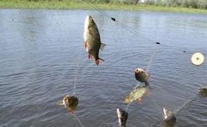 От чего зависит вкус астраханской рыбы?