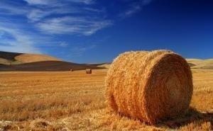 В хозяйствах Калмыкии набирает обороты сенокосная страда