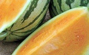 В Астрахани вывели арбуз специально для аллергиков