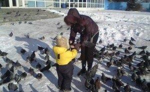 «Залётный» голубь принёс в Ростовскую область смертельно опасную для людей болезнь