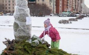 Ёлкам, оставшимся после Нового года, в Волгоградской области нашли применение