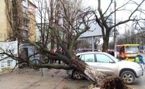 Упавшее в центре Ростова дерево убило 21-летнюю девушку