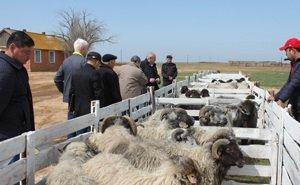 В Элисте стартовал Всероссийский сельскохозяйственный форум