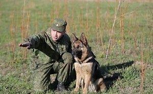 Охранять границу в Волгоградской области будут служебные собаки