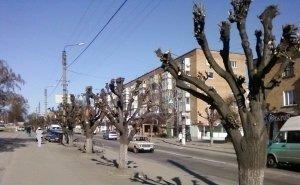 Волгоград испытывает проблемы с поливом