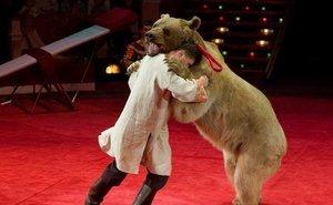 Под Волгоградом медведь во время выступления напал на дрессировщика