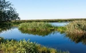 В Волгограде оптимизируют гидрорежим Волго-Ахтубинской поймы