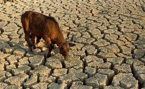 В Калмыкии обсудили проблему обводнения пастбищ