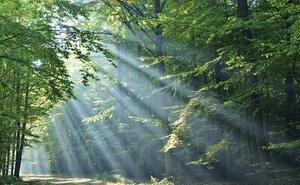 В Адыгее займутся развитием лесопромышленного кластера