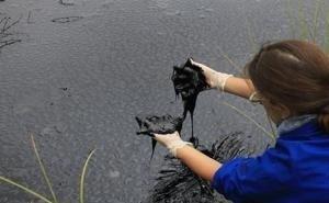 В Астрахани пытаются защитить Волгу от нефти
