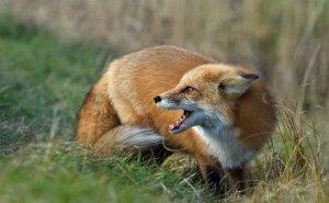 Людей в Ростовской области кусают не только собаки или дикие животные