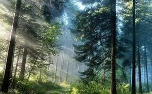 Лесные ресурсы Адыгея будет использовать максимально эффективно