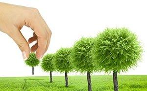 Анонсируемая властями высадка деревьев на экологии Ростовской области никак не отразится, — эксперты