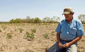 От засухи в Калмыкии пострадало больше 70 хозяйств