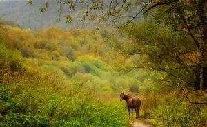 Для Адыгеи разработают Лесной план и Лесной регламент