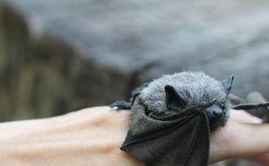 Ростовские волонтёры спасли 400 летучих мышей