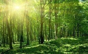 Власти Адыгеи заявили о готовности лесного фонда для создания лесопромышленного кластера
