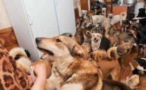 У майкопчанки силой отобрали 21 собаку, которые жили вместе с ней