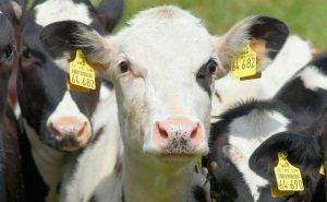 В Волгоградской области поставят на учёт всех сельхозживотных