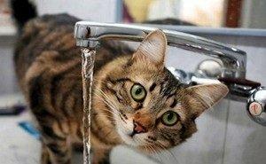 В Калмыкии ухудшилось качество питьевой воды