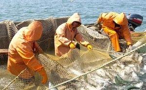 Астраханская область попала в ТОП-5 РФ по производству аквакультуры