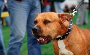 Астраханец, защищая пса, сам набросился на окружающих