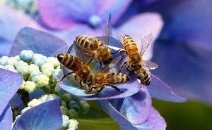 В гибели пчёл донские пчеловоды винят военных