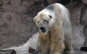 Волгоградцы требуют поить животных в передвижном зоопарке