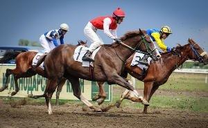 Глава Калмыкии обещал поддержать конный спорт