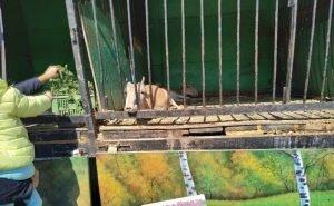 Астраханцы требуют изъять сайгаков из зоопарка Росгосцирка