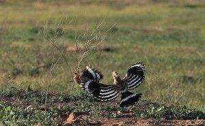 В заповеднике «Чёрные земли» обустроят тропы для туристов