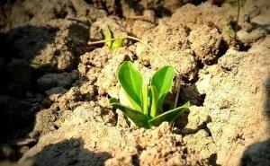 В Адыгее подняли проблему плодородия почв и сохранения лесов