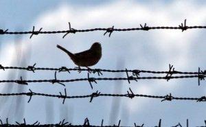 Экс-начальник тюрьмы Астрахани обещал свободу заключённым в обмен на стройматериалы