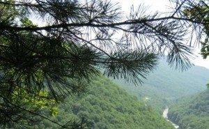 В Адыгее обсудили перспективы развития лесной отрасли