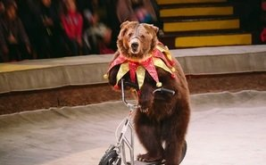 Властей Ростовской области призывают отказаться от выступления животных в цирках