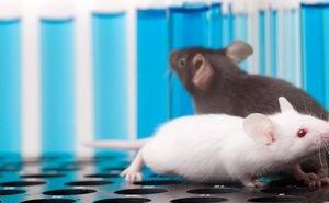 Ростовские учёные нашли экспресс-метод распознавания онкологии