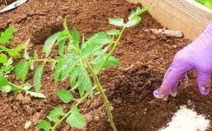Астраханские учёные придумали порошок для защиты растений от вредителей