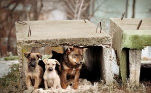 Под Астраханью открылся первый приют для бездомных животных