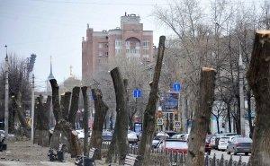 Волгоградцы возмущены «массовой расправой» над деревьями в центре города