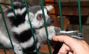 Животным в контактном зоопарке Волгограда не давали отдыхать