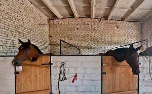 Что будет с лошадьми из «Соснового бора» Волгограда, решат после карантина
