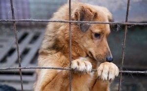 Волгоградские собаки в разгар коронавируса едут в Европу