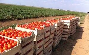 Продукция астраханских фермеров не соответствует требованиям сетевиков