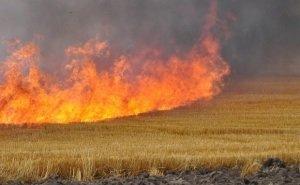 Огонь с пшеничных полей уничтожил 10 домов в Волгоградской области