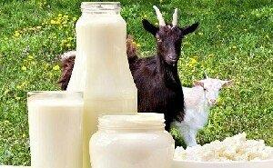 В Адыгее запустили производство продукции из козьего молока в промышленных масштабах